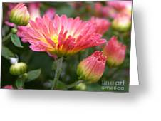 Rainbow Mums Greeting Card by Living Color Photography Lorraine Lynch