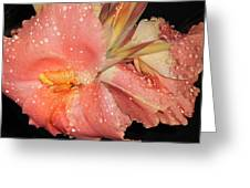 Raindrops On Peach Canna Greeting Card by Dianne Larsen