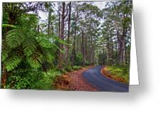 Rainforest - Port Macquarie - Australia Greeting Card by Bryan Freeman