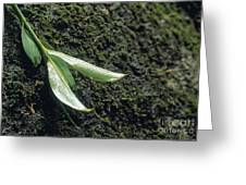 Rainforest Greeting Card by Juan  Silva