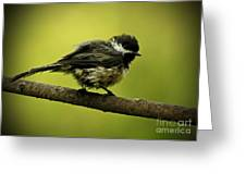 Rainy Days - Chickadee Greeting Card by Inspired Nature Photography By Shelley Myke