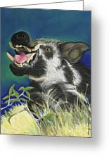 Razorback Greeting Card by Tracy L Teeter