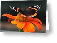 Red Admiral Greeting Card by Nicola Butt