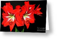Red Amaryllis Twins Greeting Card by Pravine Chester