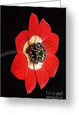 Red Anemone Greeting Card by Richard Garvey-Williams