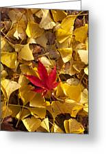 Red Autumn Leaf Greeting Card by Garry Gay