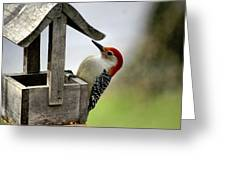 Red Bellied Woodpecker Greeting Card by L Granville Laird