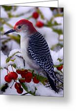 Red Bellied Woodpecker Greeting Card by Ron Jones