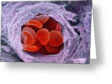 Red Blood Cells Greeting Card by Professors P.m. Motta & S. Correr