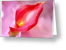 Red Calla Lily Greeting Card by Mike McGlothlen