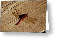 Red Dragon Fly Greeting Card by LeeAnn McLaneGoetz McLaneGoetzStudioLLCcom