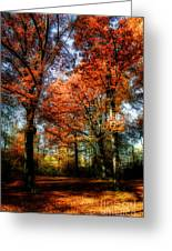 Red Fall Greeting Card by Hannes Cmarits
