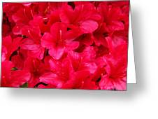 Red Floral art prints Rhododendron Flowers Rhodies Greeting Card by Baslee Troutman