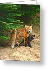 Red Fox And Kit Greeting Card by Marvil LaCroix