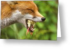 Red Fox Eating A Chick Greeting Card by Duncan Shaw