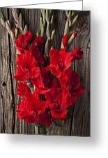 Red Gladiolus Greeting Card by Garry Gay