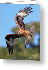Red Kite On A Mission Greeting Card by Clare Scott