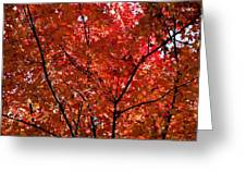 Red Leaves Black Branches Greeting Card by Rich Franco