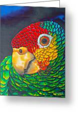 Red Lorred Parrot Greeting Card by Daniel Jean-Baptiste