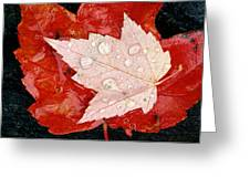Red Maple Leaves Greeting Card by Mike Grandmailson