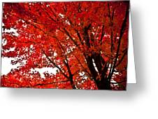 Red Maple Tree Greeting Card by Kamil Swiatek