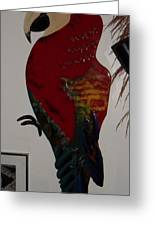 Red Mccaw Greeting Card by Val Oconnor