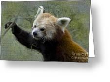 Red Panda Greeting Card by Heiko Koehrer-Wagner