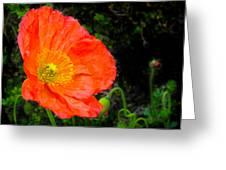 Red Poppy Greeting Card by Natalya Shvetsky