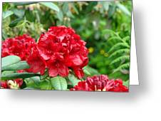 Red Rhododendron Floral Art Prints Rhodies Greeting Card by Baslee Troutman