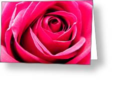 Red Rose Macro Greeting Card by Sandi OReilly