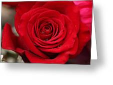 Red Rose Of Love II Greeting Card by Sheila Kay McIntyre