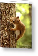 Red Squirrel Greeting Card by Ted Kinsman