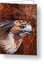 Red-tailed Hawk Greeting Card by J Larry Walker