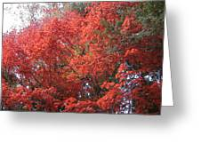 Red Tree Greeting Card by Naxart Studio