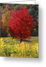 Red Tree Greeting Card by Trevor Slauenwhite