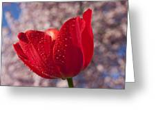 Red Tulip And Cherry Tree Greeting Card by Garry Gay