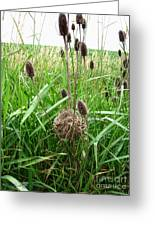 Red-winged Blackbird Nest Greeting Card by J McCombie