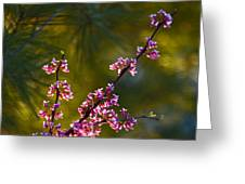 Redbud Greeting Card by Rob Travis