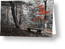 Reds In The Woods Greeting Card by Aimelle
