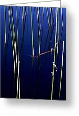 Reeds Of Reflection Greeting Card by Chris Brannen