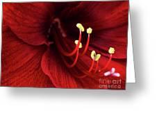 Ref Lily Greeting Card by Carlos Caetano