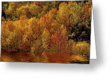 Reflections Of Autumn Greeting Card by Carol Cavalaris