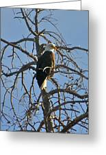 Regal Eagle Greeting Card by Bob Berwyn