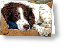 Rest Time For Bella Greeting Card by James Steele