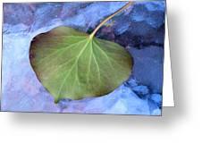 Reverse Ivy On Blue Greeting Card by Beth Akerman