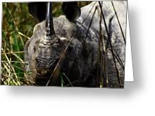Rhino Greeting Card by Tues Rahman