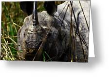 Rhino Greeting Card by Tues Rahman