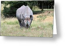 Rhinocerous 13 Greeting Card by Ruth Hallam