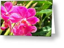 Rich Balinese Orchids Greeting Card by Samantha Mills