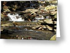 Ricketts Glen Waterfall 3975 Greeting Card by David Dehner